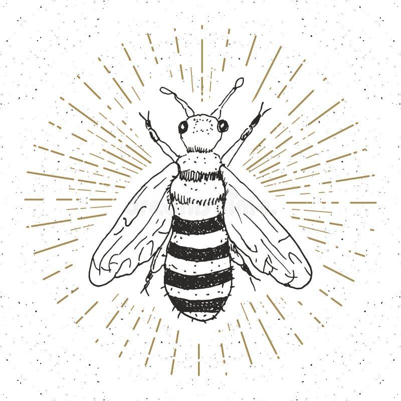 Εκλεκτής ποιότητας ετικέτα, συρμένη χέρι μέλισσα, grunge κατασκευασμένο διακριτικό, αναδρομικό πρότυπο λογότυπων ελεύθερη απεικόνιση δικαιώματος
