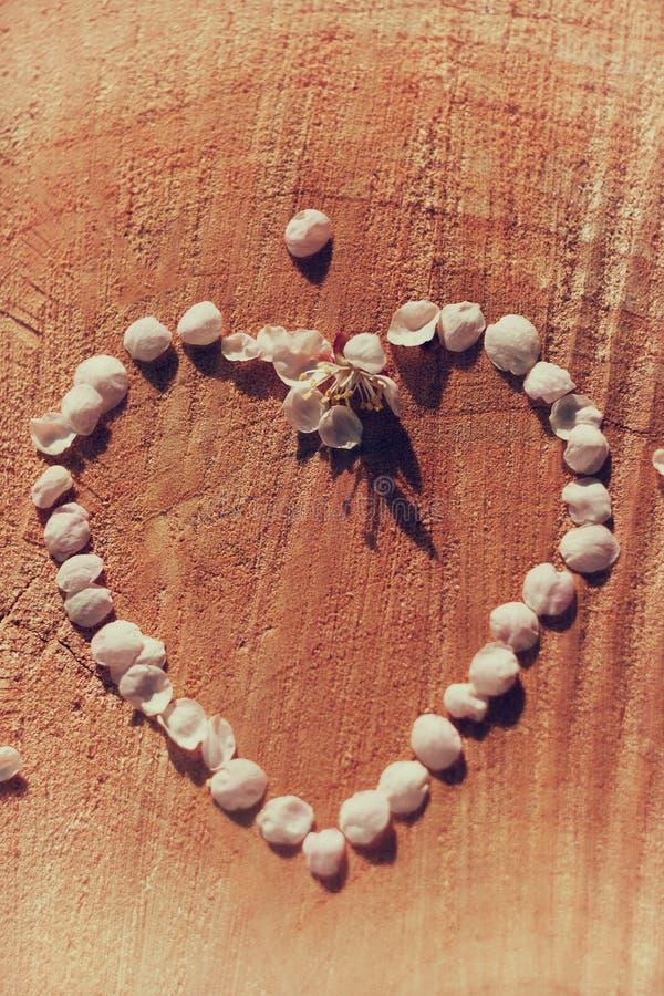 Εκλεκτής ποιότητας κορίτσι περιγράμματος καρδιών των πετάλων κερασιών στο ραγισμένο ξύλινο υπόβαθρο στοκ φωτογραφίες