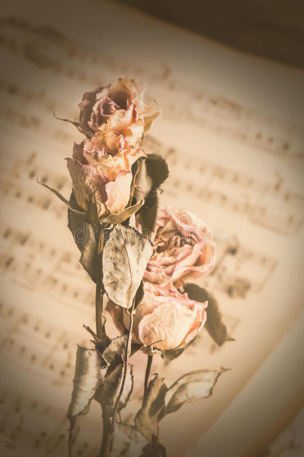 Εκλεκτής ποιότητας ξηρά λουλούδια στη μουσική στοκ φωτογραφίες