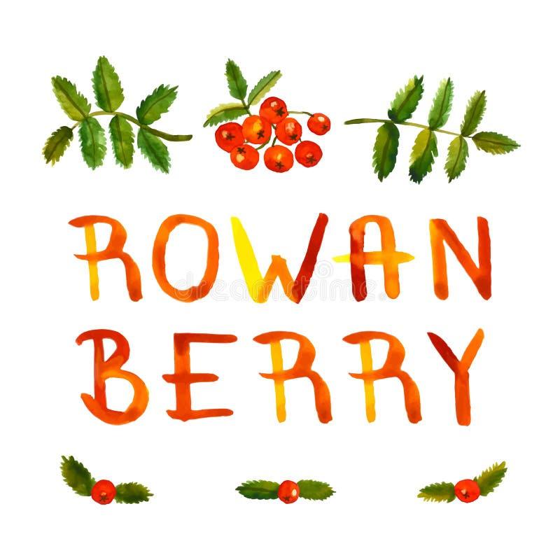 Εκλεκτής ποιότητας συρμένες χέρι διανυσματικές υπόβαθρο και κάρτα watercolor μούρων του Rowan με το χειρόγραφο κείμενο ελεύθερη απεικόνιση δικαιώματος