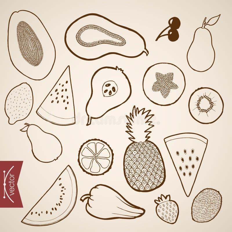 Εκλεκτής ποιότητας συρμένο χέρι διανυσματικό ora τροφίμων φρούτων χάραξης διανυσματική απεικόνιση