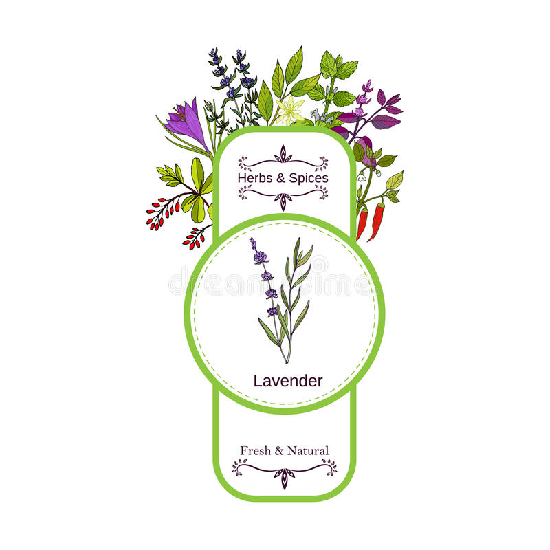 Εκλεκτής ποιότητας συλλογή ετικετών χορταριών και καρυκευμάτων Lavender διανυσματική απεικόνιση