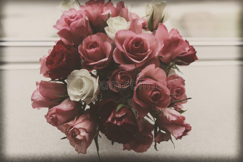 Εκλεκτής ποιότητας τριαντάφυλλα στοκ εικόνες με δικαίωμα ελεύθερης χρήσης