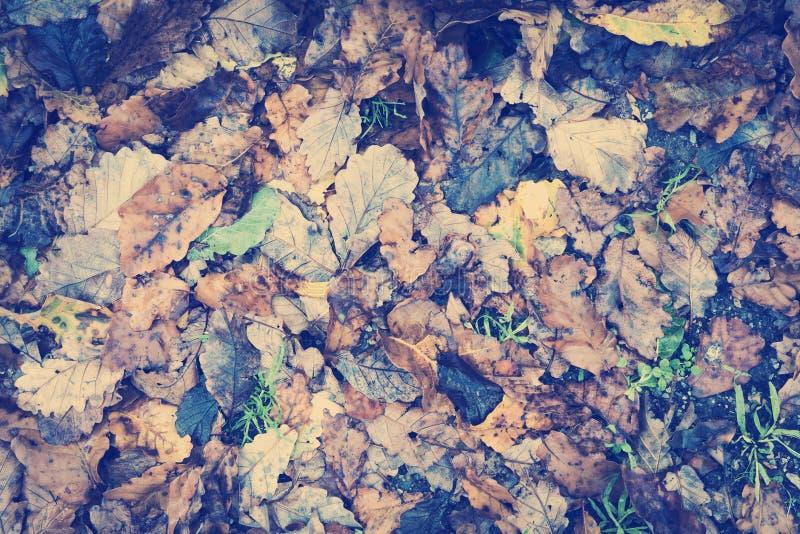 Εκλεκτής ποιότητας φύλλα φθινοπώρου στοκ εικόνα με δικαίωμα ελεύθερης χρήσης