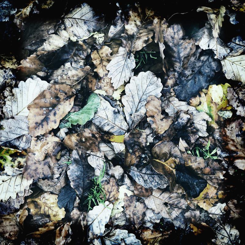Εκλεκτής ποιότητας φύλλα φθινοπώρου στοκ εικόνες με δικαίωμα ελεύθερης χρήσης