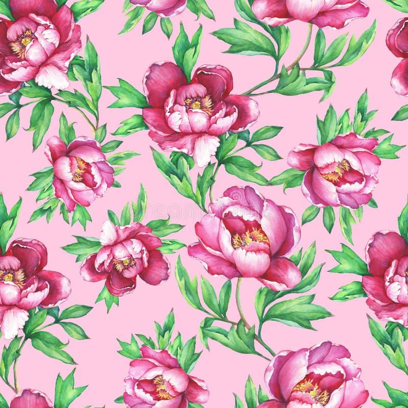 Εκλεκτής ποιότητας floral άνευ ραφής σχέδιο με τα ανθίζοντας ρόδινα peonies, στο ρόδινο υπόβαθρο Συρμένη χέρι ζωγραφική watercolo ελεύθερη απεικόνιση δικαιώματος