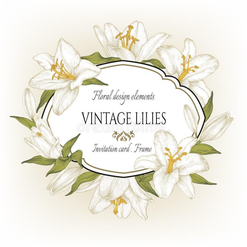 Εκλεκτής ποιότητας floral κάρτα με ένα πλαίσιο των άσπρων κρίνων διανυσματική απεικόνιση