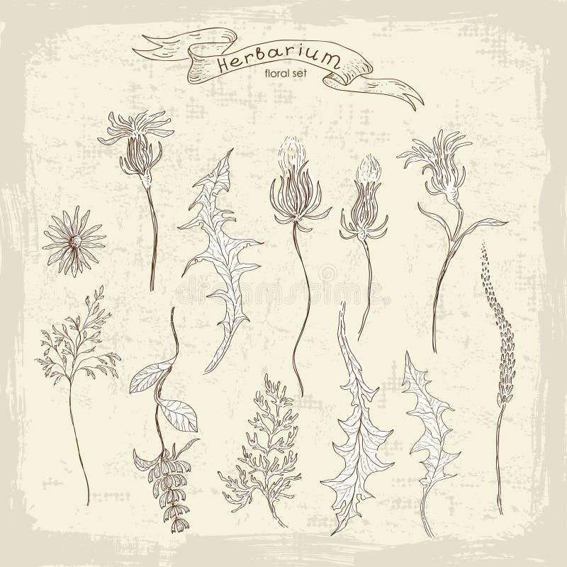 Εκλεκτής ποιότητας floral σύνολο απεικόνιση αποθεμάτων