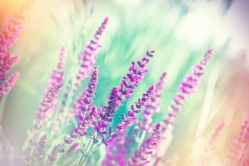 Εκλεκτική εστίαση στα όμορφα πορφυρά λουλούδια στο λιβάδι στοκ εικόνες με δικαίωμα ελεύθερης χρήσης