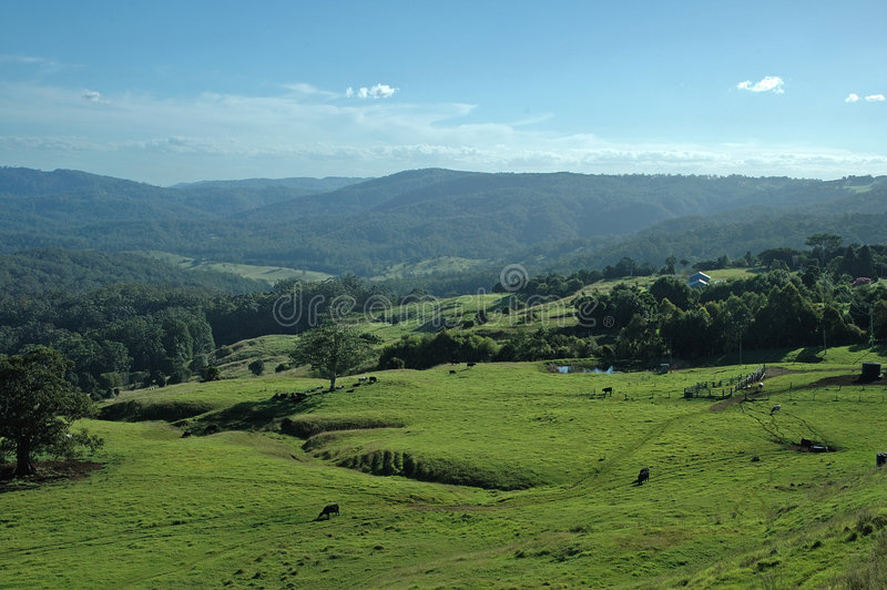 Download ελάτε σπίτι αγελάδων στοκ εικόνες. εικόνα από χώρα, χλόη - 96778