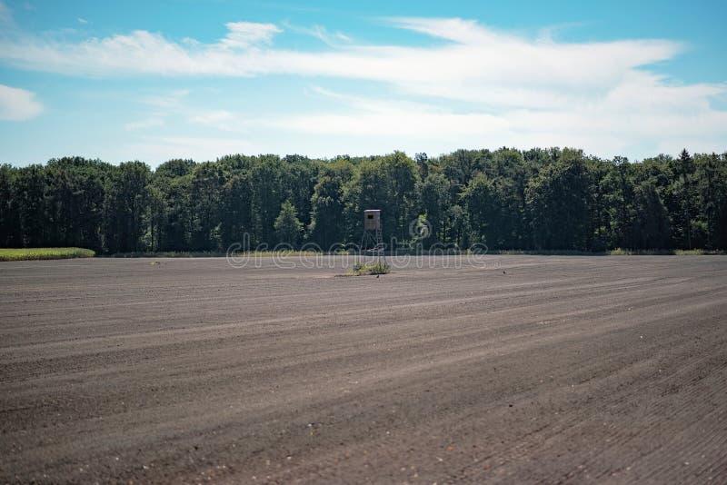 Ελάφια τυφλά στο γυμνό καλλιεργήσιμο έδαφος στοκ φωτογραφίες με δικαίωμα ελεύθερης χρήσης