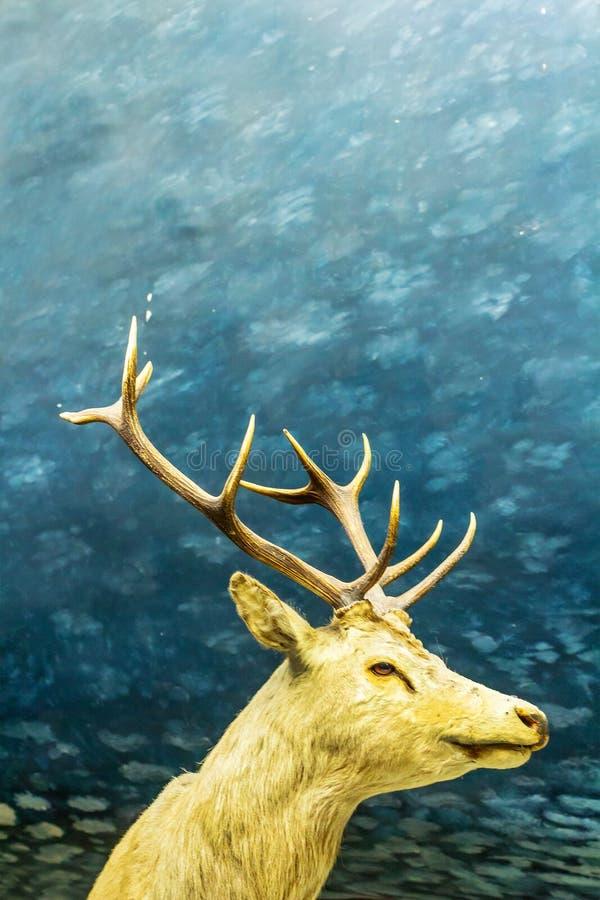 Ελάφια Beautifiul, καλλιτεχνική εικόνα, μουσείο φυσικής ιστορίας, Λονδίνο στοκ εικόνα με δικαίωμα ελεύθερης χρήσης