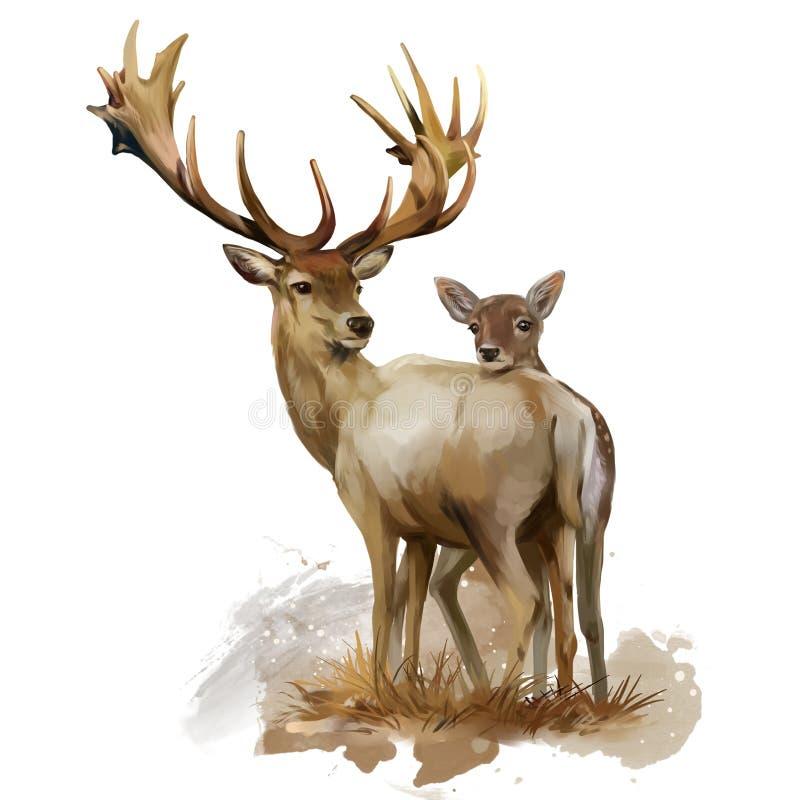 ελάφια fawn υψηλό watercolor ποιοτικής ανίχνευσης ζωγραφικής διορθώσεων πλίθας photoshop πολύ διανυσματική απεικόνιση