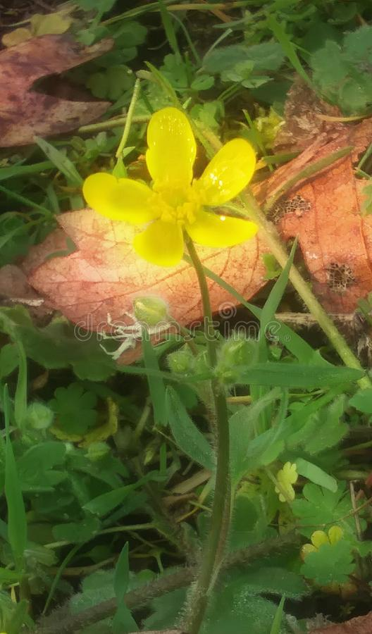 Ελάχιστα κίτρινος στοκ εικόνα