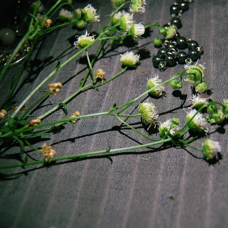 Ελάχιστα chamomile ως βοτανική έμπνευση στοκ φωτογραφίες