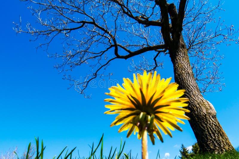 Ελάχιστη φύση κάτω από έναν τέλεια μπλε ουρανό στοκ φωτογραφίες με δικαίωμα ελεύθερης χρήσης