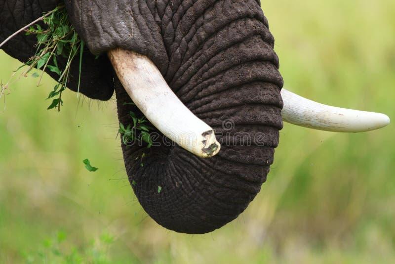 ελέφαντας κινηματογραφή&si στοκ εικόνα με δικαίωμα ελεύθερης χρήσης