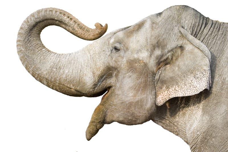 ελέφαντας στοκ εικόνα με δικαίωμα ελεύθερης χρήσης