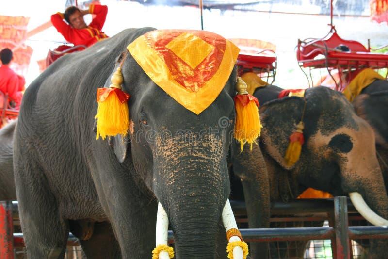 ελέφαντες Ταϊλάνδη ayutthaya στοκ φωτογραφία