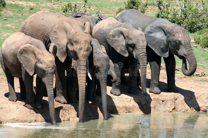 ελέφαντες waterhole στοκ εικόνα