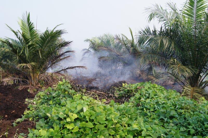 Ελαιοφοίνικας στην ελαφριά ομίχλη στοκ φωτογραφία με δικαίωμα ελεύθερης χρήσης