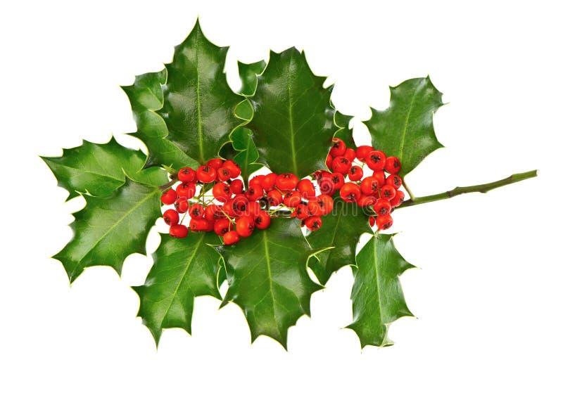 Ελαιόπρινος διακοσμήσεων Χριστουγέννων με τα κόκκινα μούρα στοκ εικόνες