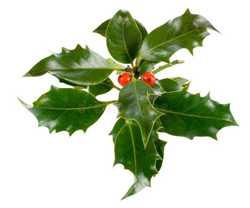 ελαιόπρινος διακοσμήσεων Χριστουγέννων ilex στοκ εικόνες με δικαίωμα ελεύθερης χρήσης