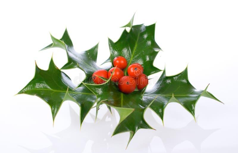ελαιόπρινος διακοσμήσεων Χριστουγέννων ilex στοκ εικόνα με δικαίωμα ελεύθερης χρήσης