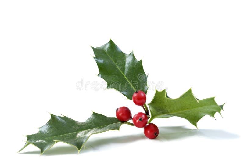 Ελαιόπρινος Χριστουγέννων με τα κόκκινα μούρα Παραδοσιακή εορταστική διακόσμηση Κλάδος της Holly με τα κόκκινα μούρα στο άσπρο υπ στοκ φωτογραφία με δικαίωμα ελεύθερης χρήσης