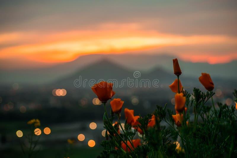 Ελατήριο-θερινό πορτοκαλί ηλιοβασίλεμα στοκ φωτογραφία με δικαίωμα ελεύθερης χρήσης