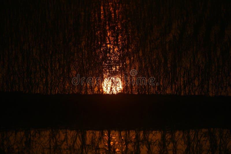 Ελαφριά αντανάκλαση ηλιοβασιλέματος σε έναν τομέα ορυζώνα στοκ φωτογραφίες με δικαίωμα ελεύθερης χρήσης