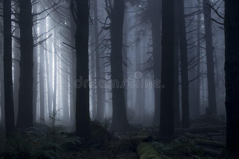 Ελαφριά διάβαση μέσω των δέντρων κατά τη διάρκεια μιας ομιχλώδους ημέρας στα ξύλα στοκ φωτογραφία με δικαίωμα ελεύθερης χρήσης