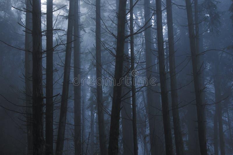 Ελαφριά διάβαση μέσω των δέντρων κατά τη διάρκεια μιας ομιχλώδους ημέρας στα ξύλα στοκ εικόνες