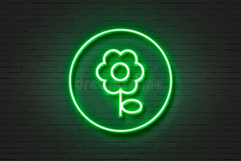 Ελαφριά μαργαρίτα λουλουδιών εικονιδίων νέου στοκ εικόνες