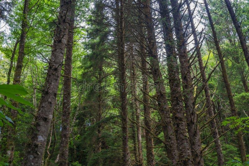 Ελαφριά φίλτρα μέσω των δέντρων τροπικών δασών στοκ εικόνες