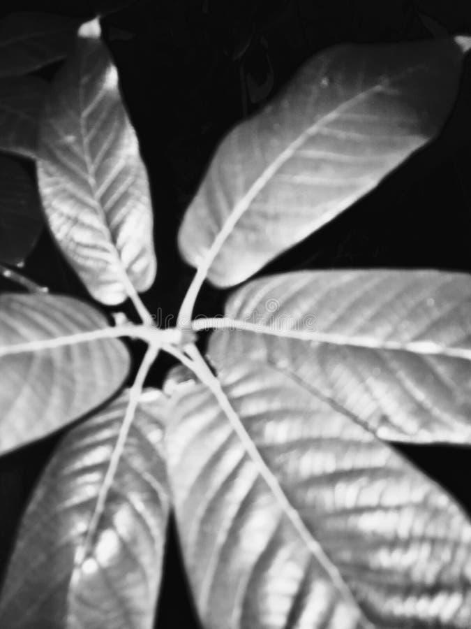 Ελαφριά φύλλα στοκ φωτογραφίες με δικαίωμα ελεύθερης χρήσης