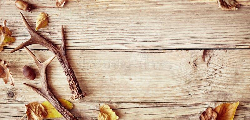 Ελαφόκερες ελαφιών υπόστεγων στο ξύλο με τα ζωηρόχρωμα φύλλα στοκ εικόνα με δικαίωμα ελεύθερης χρήσης