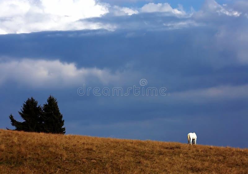 Ελευθερία στη φύση στοκ εικόνες
