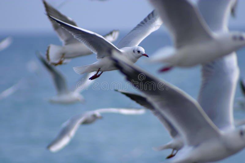 ελευθερία στοκ φωτογραφίες με δικαίωμα ελεύθερης χρήσης
