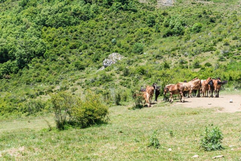 Ελεύθερα άγρια άλογα στο πράσινο λιβάδι στοκ φωτογραφία με δικαίωμα ελεύθερης χρήσης