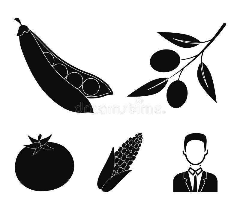Ελιές σε έναν κλάδο, γλυκά μπιζέλια, σπάδικας καλαμποκιού, κόκκινη ντομάτα Τα λαχανικά καθορισμένα τα εικονίδια συλλογής στο μαύρ ελεύθερη απεικόνιση δικαιώματος