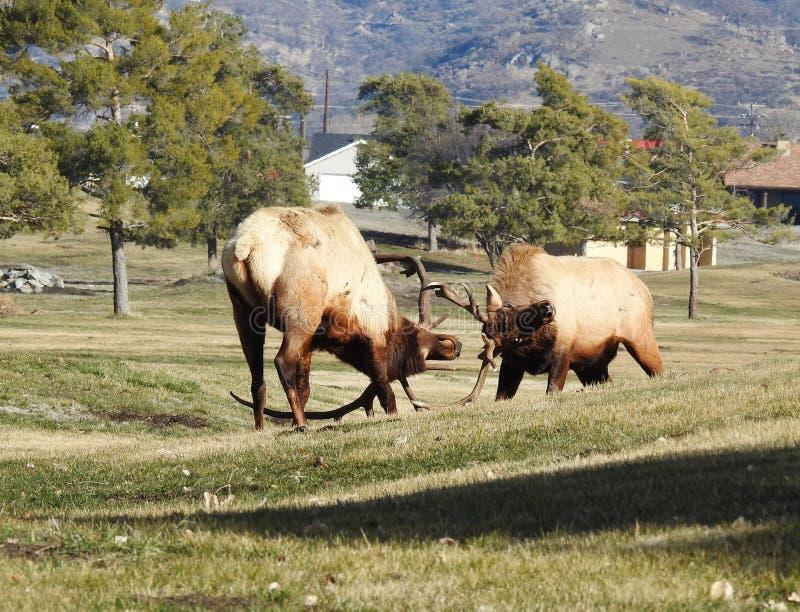 Ελκίδα του βουνού Τεχατσάπι στοκ εικόνα