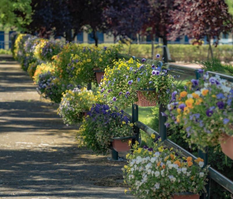 Ελκυστικές ρυθμίσεις λουλουδιών σε μια πορεία σε ένα πάρκο στοκ εικόνες με δικαίωμα ελεύθερης χρήσης
