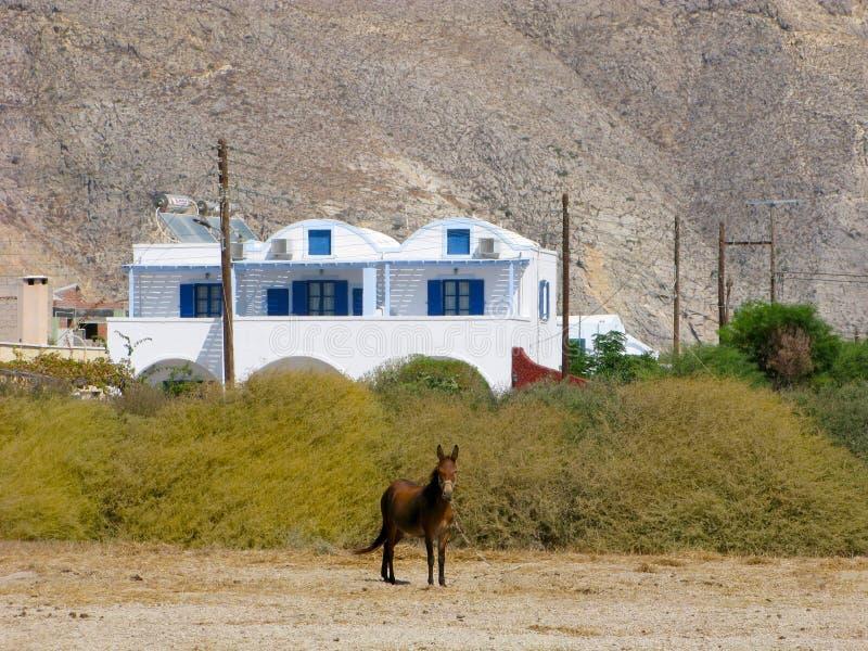 Ελλάδα, Santorini, χωριό Perissa, γάιδαρος και σπίτι Cycladic στοκ φωτογραφίες