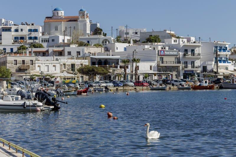 Ελληνικά νησιά Άποψη του λιμένα Gavrio και του κολυμπώντας νησιού Άνδρου κύκνων, Κυκλάδες, Ελλάδα στοκ φωτογραφία με δικαίωμα ελεύθερης χρήσης