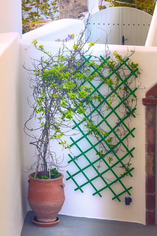 Ελληνικός λευκός οίκος και δέντρο σε λουλουδάτο, Ελλάδα στοκ εικόνα με δικαίωμα ελεύθερης χρήσης