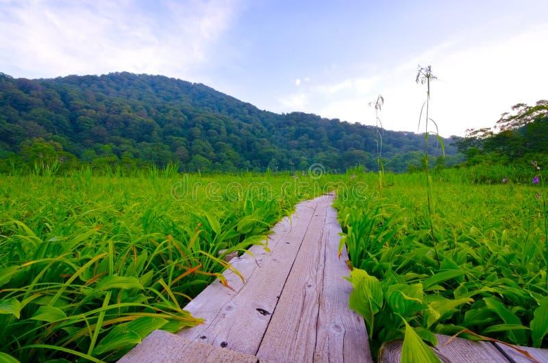 Ελώδης περιοχή Tanashiro, Ιαπωνία. στοκ φωτογραφία με δικαίωμα ελεύθερης χρήσης