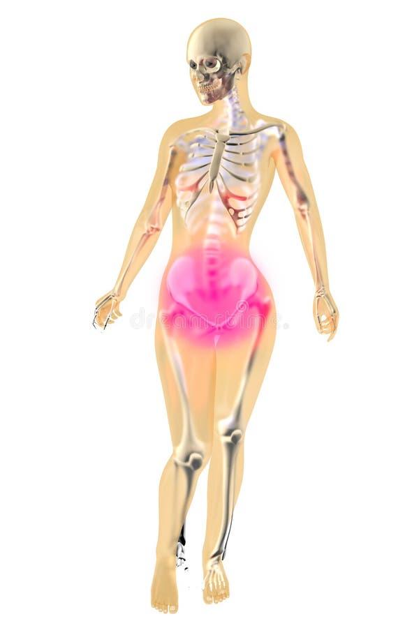 Εμμηνορροϊκός πόνος - θηλυκή ανατομία απεικόνιση αποθεμάτων