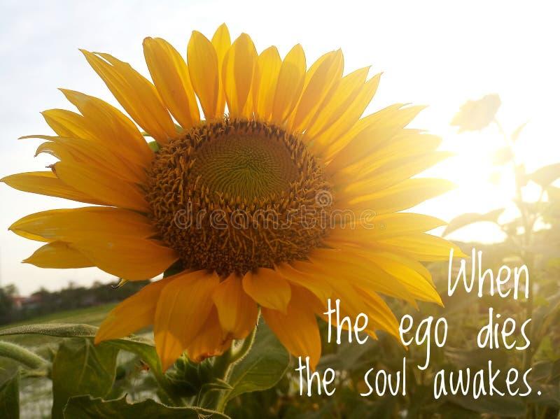 Εμπνευσμένη παρόρμηση - Όταν πεθαίνει το εγώ, η ψυχή ξυπνά Με φόντο το πρωινό ηλιακό φως πάνω από τον κήπο ηλιοτρόπιου στοκ φωτογραφίες με δικαίωμα ελεύθερης χρήσης