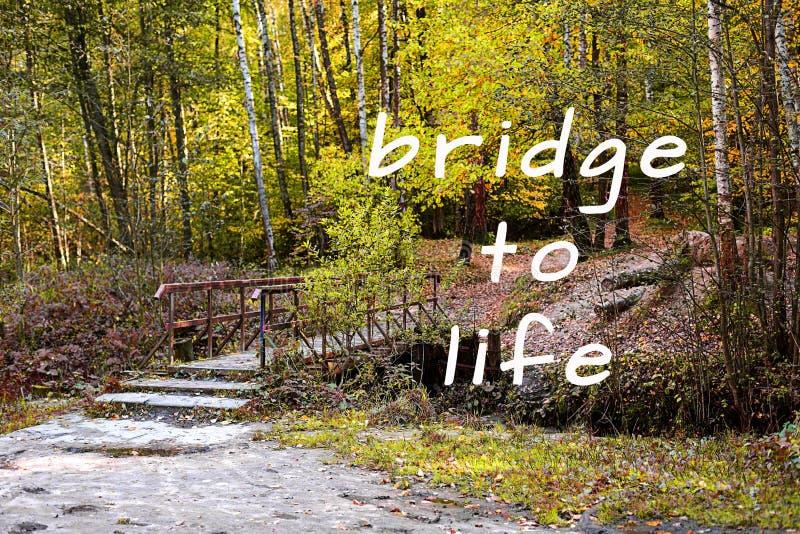 Εμπνευσμένο απόσπασμα Ξύλινη γέφυρα στο πάρκο στοκ φωτογραφία